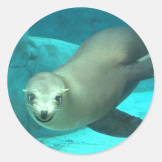 Smiling Sea Lion - Saint Louis Zoo Round Sticker