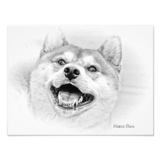 Smiling Shiba Inu dog Photographic Print