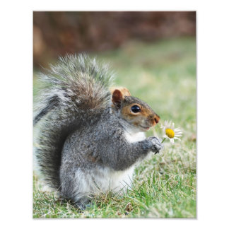 Smiling Squirrel with Daisy Photographic Print