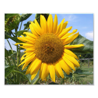 Smiling Sunflower Custom Print Photo