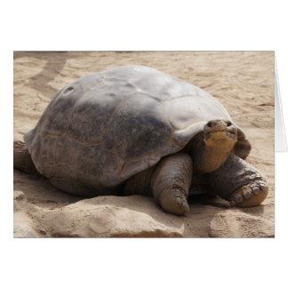 Smiling Tortoise Blank Card