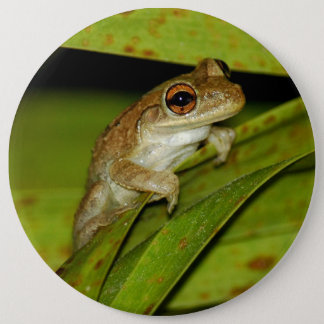 Smiling tree frog Button