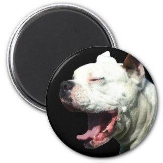 Smiling White Boxer dog magnet