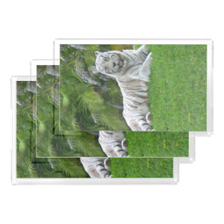 Smiling White Tiger and Palm Trees Acrylic Tray