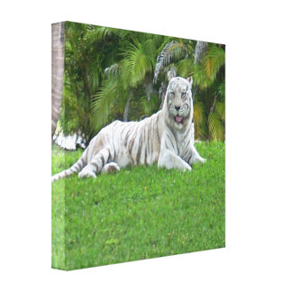 Smiling White Tiger and Palm Trees Canvas Print