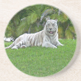 Smiling White Tiger and Palm Trees Coaster