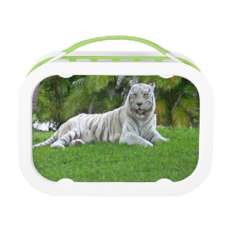 Smiling White Tiger and Palm Trees Lunch Box