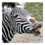 Smiling Zebra Invitations