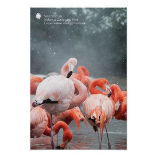 Smithsonian | Flamingos In The Snow Poster