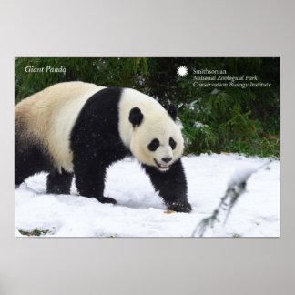 Smithsonian | Giant Pandas In The Snow Poster