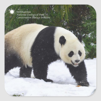 Smithsonian | Giant Pandas In The Snow Square Sticker