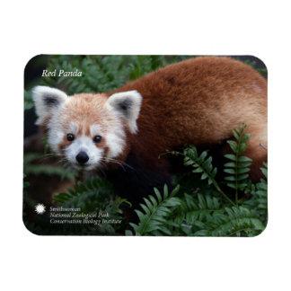 Smithsonian | Red Panda Magnet