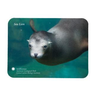 Smithsonian | Sea Lion Magnet