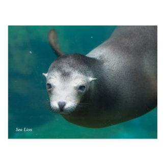 Smithsonian   Sea Lion Postcard