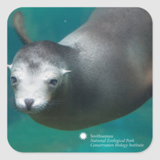 Smithsonian | Sea Lion Square Sticker