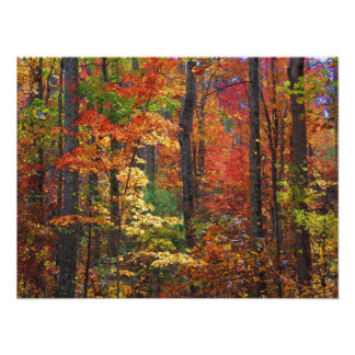Smoky Mountain Autumn 2 Poster