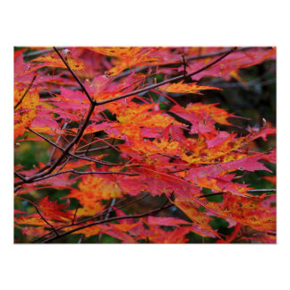 Smoky Mountain Autumn Poster