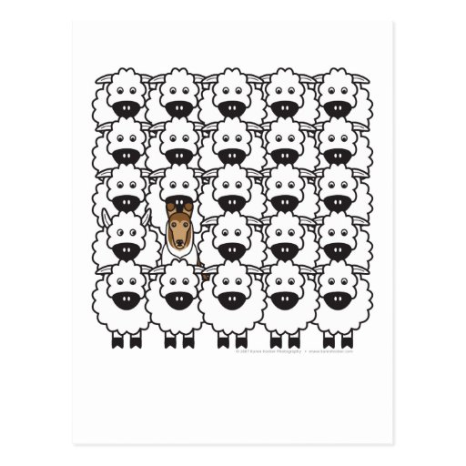 Smooth Collie in the Sheep Post Cards