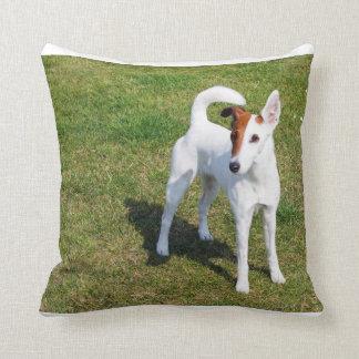 smooth fox-terrier-full cushion