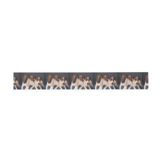 smooth fox terrier group invitation belly band