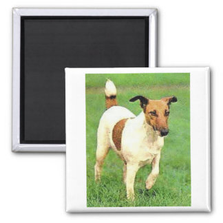 Smooth Fox Terrier Square Magnet