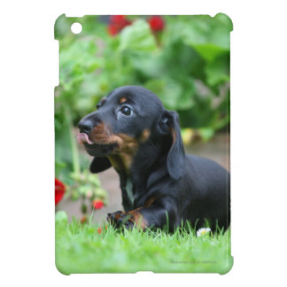 Smooth-haired Miniature Dachshund 1 Cover For The iPad Mini