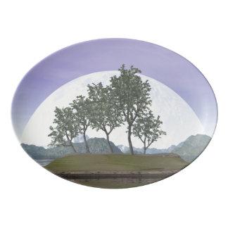 Smooth leaved elm bonsai tree - 3D render Porcelain Serving Platter