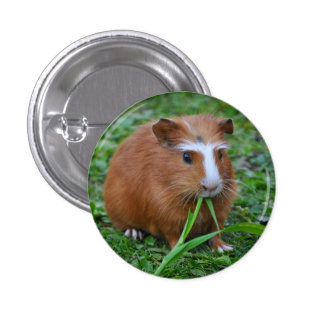 Smooth, Short Hair, Red and White Guinea Pig 3 Cm Round Badge