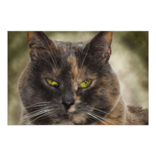 Smug Kitty - Do What You Want? Print