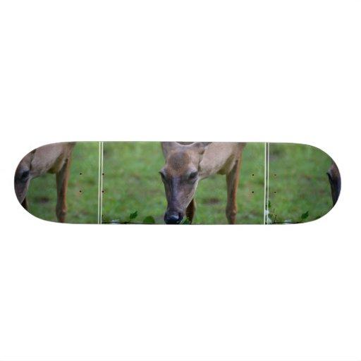Snacking Deer Skateboard Decks