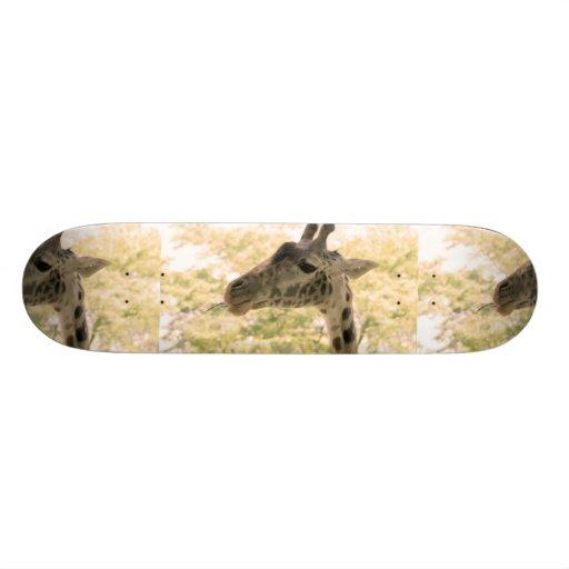 Snacking Giraffe Skate Boards