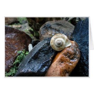 Snail Card