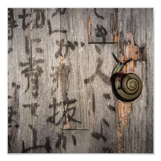 Snail Mail Escargot on Asian Calligraphy Photo