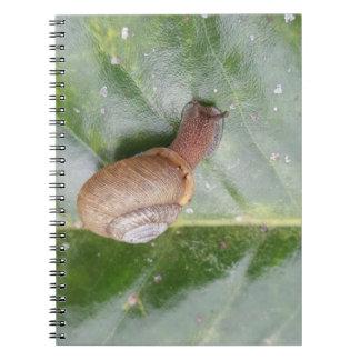 Snail on a leaf notebooks