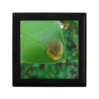 Snail on a magnolia leaf small square gift box