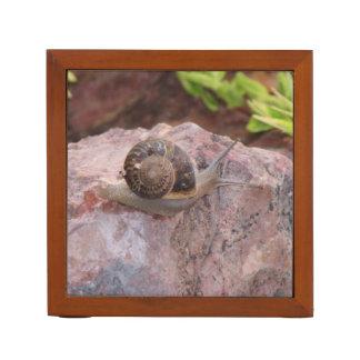 Snail on a Rock Desk Organiser