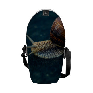 Snail On Blue Closeup, Nature Animal Photograph Commuter Bag