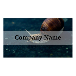 Snail On Blue Closeup, Nature Animal Photograph Pack Of Standard Business Cards