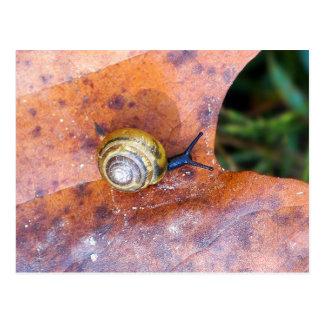 Snail on Brown Leaf Postcard