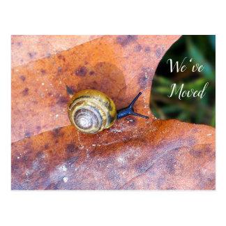 Snail on Brown Leaf We've Moved Postcard