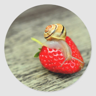 Snail on Strawberry Classic Round Sticker