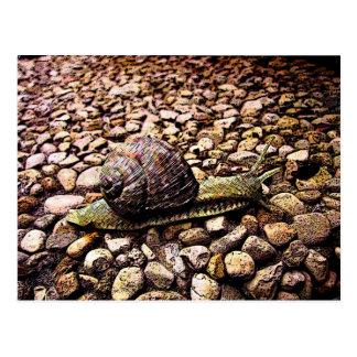Snail Postcard