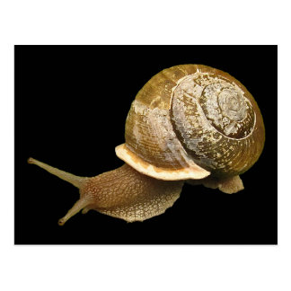Snail Post Cards