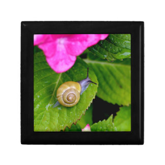 snail small square gift box