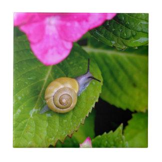 snail small square tile
