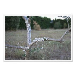 Snails on a branch of olive-tree art photo