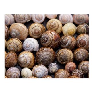Snails Postcard