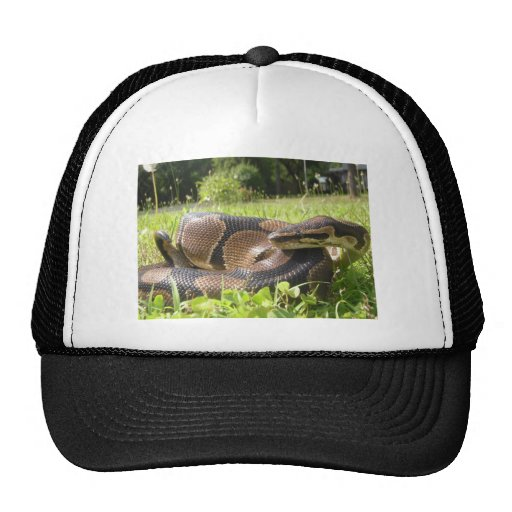 Snake Designs Hat