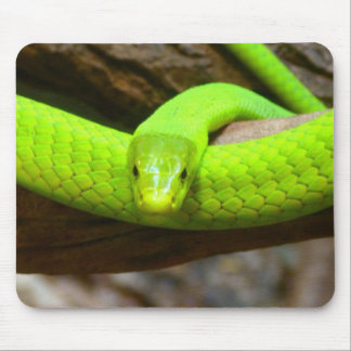 Snake Green Mamba Animal Scary Party Destiny Mouse Pad