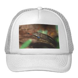 snake mesh hat